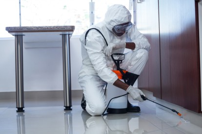 Ant Infestation, Pest Control in Lambeth, SE11. Call Now 020 8166 9746
