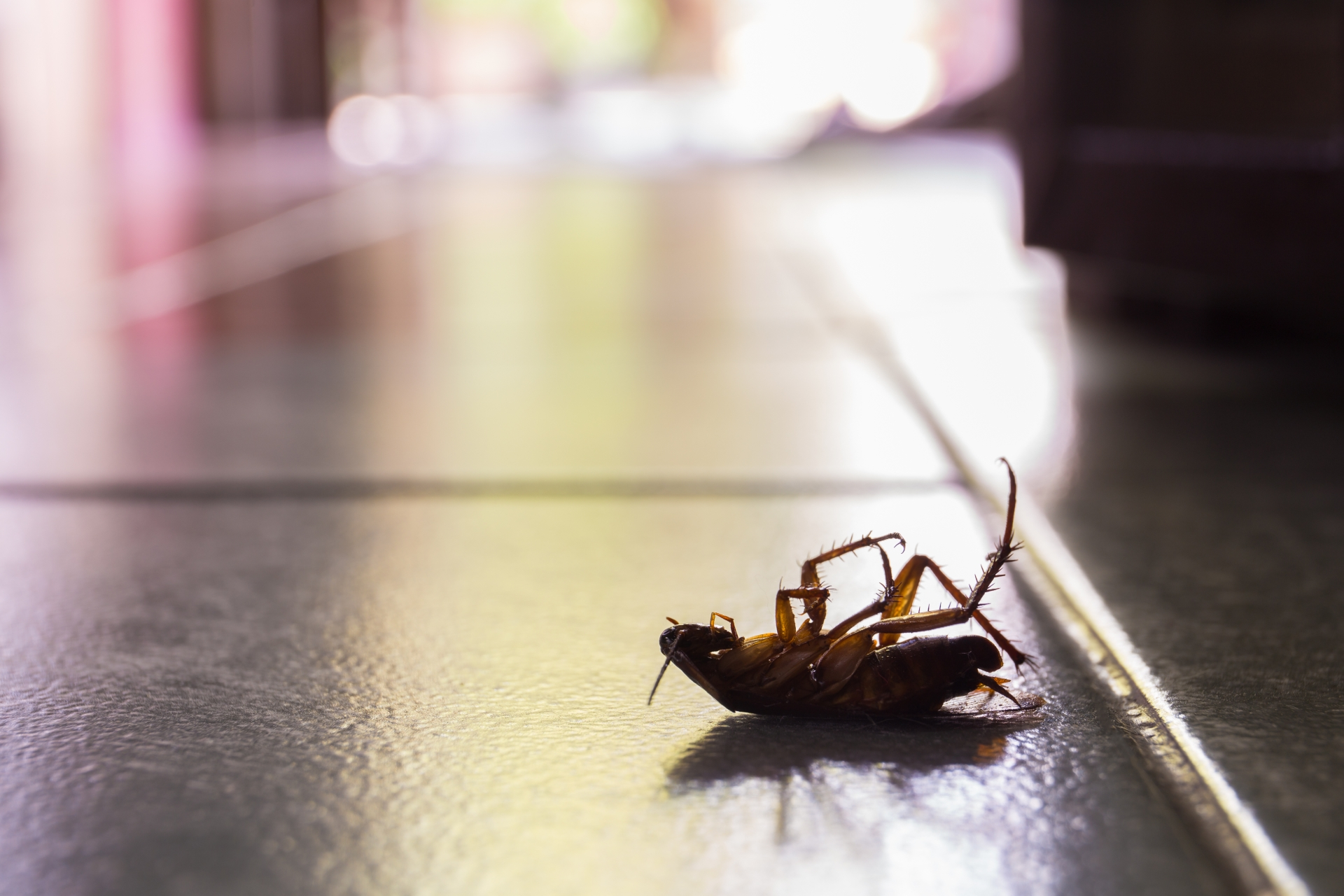 Cockroach Control, Pest Control in Lambeth, SE11. Call Now 020 8166 9746